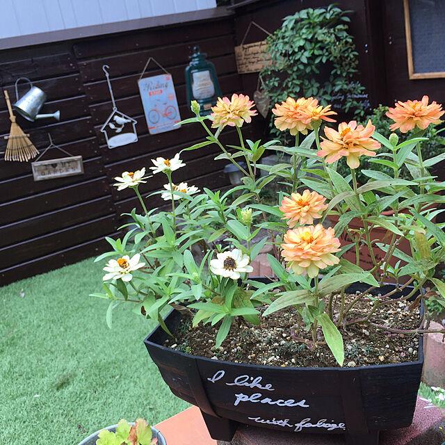 Overview,ガーデニング,みんな大好き♡,フォロワーさんに感謝♡,いつもいいね!ありがとうございます♪,あとでゆっくりお返事回りますね♡,皆さんのお陰で励みになってます♡,ヘイヘイホー部,花も緑も好き♡,娘のベット再利用♡,フリーハンド♡,手作りのお庭♡のインテリア実例   RoomClip (ルームクリップ)