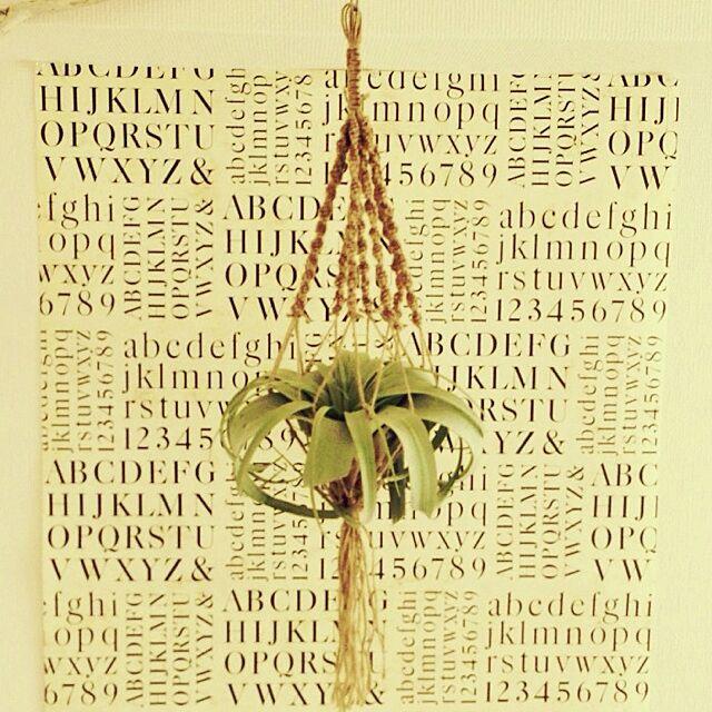 壁/天井/植物/手作り/雑貨/エアプランツ...などのインテリア実例 - 2014-03-04 14:10:34