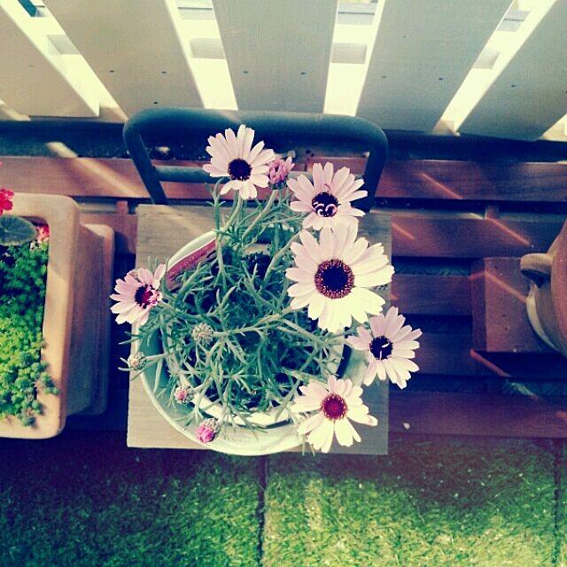 部屋全体/ベランダガーデン/植物のインテリア実例 - 2014-03-16 07:16:14