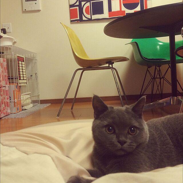 Herman Miller (ハーマンミラー)とねこばかりですいませんと猫初心者のインテリア実例