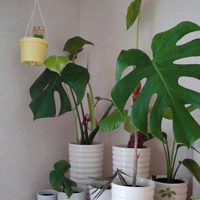 棚/植物/手作り/ハンドメイド/DIYのインテリア実例 - 2014-03-12 14:21:54