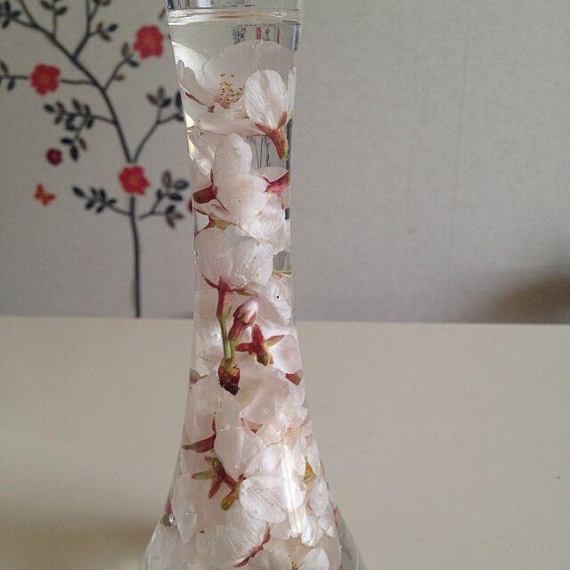 ガラスの花瓶に沈めた桜の花の水中花。手軽にできて、シンプルキレイなディスプレイ。