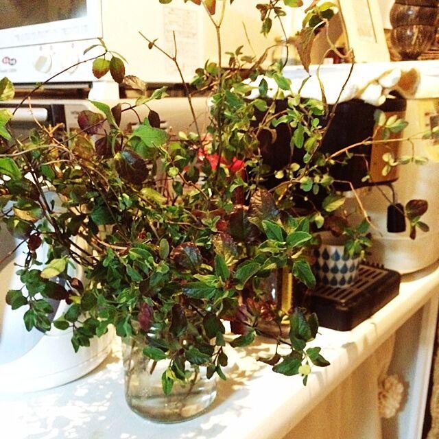 キッチン/植物/herbのインテリア実例 - 2014-03-19 20:38:07