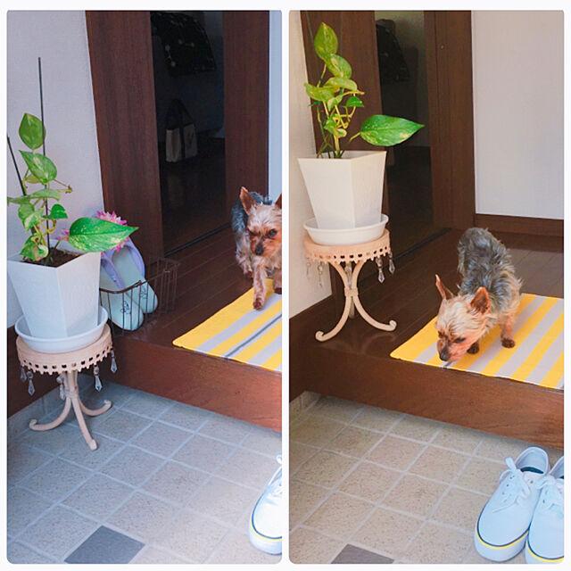 玄関/入り口で使える犬と暮らすのインテリア実例