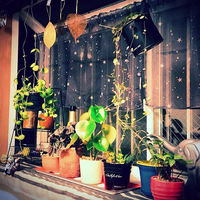 壁/天井/わたし空間/植物/多肉植物/観葉植物...などのインテリア実例 - 2014-02-02 21:25:04