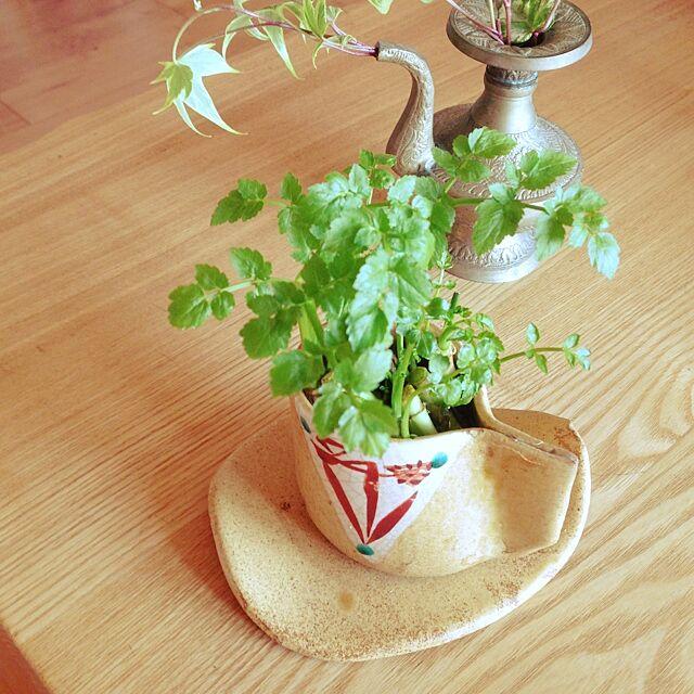机/無垢や天然木が好き/観葉植物/グリーン/植物のある部屋...などのインテリア実例 - 2014-03-25 14:01:01