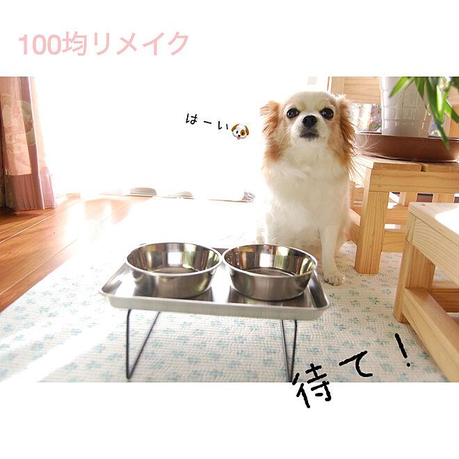 「マグネットでペタッ◎高さを出して食べやすいわんちゃんのフードスタンド」 by knkさん