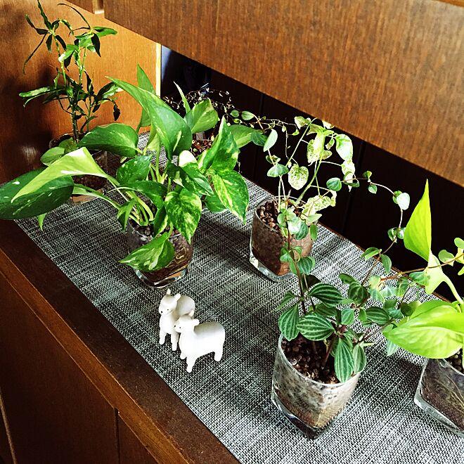 棚/観葉植物のインテリア実例 - 2015-08-05 16:13:46
