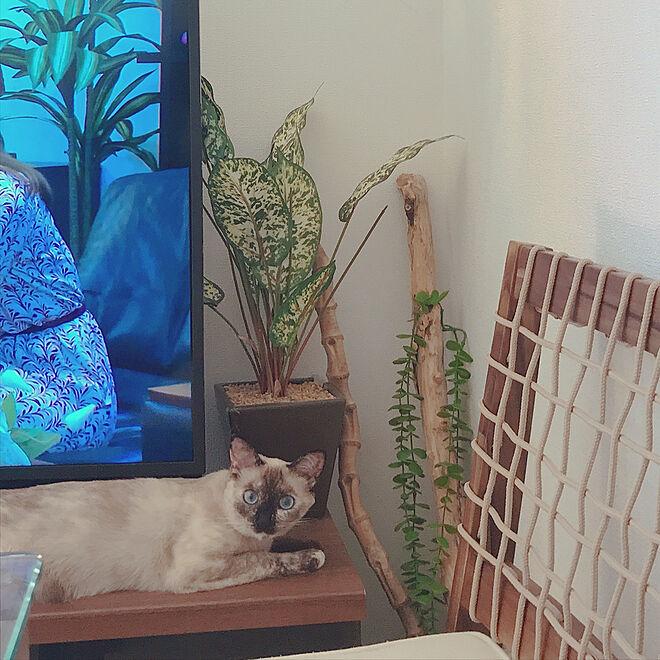 ねこインテリア/ねこが好き/ねこのいる風景/猫/フェイクグリーンのある暮らし...などのインテリア実例 - 2021-08-05 11:46:39