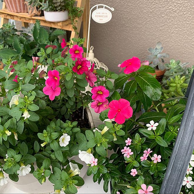 フェアリースター♡/ミリオンベル/みなさんとの出会いに感謝♡/お花のある暮らし/ガーデン雑貨...などのインテリア実例 - 2021-06-20 14:40:14