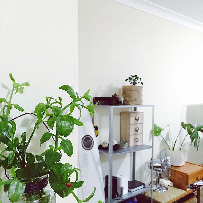 リビング/観葉植物/IKEAのインテリア実例 - 2016-03-11 08:28:49