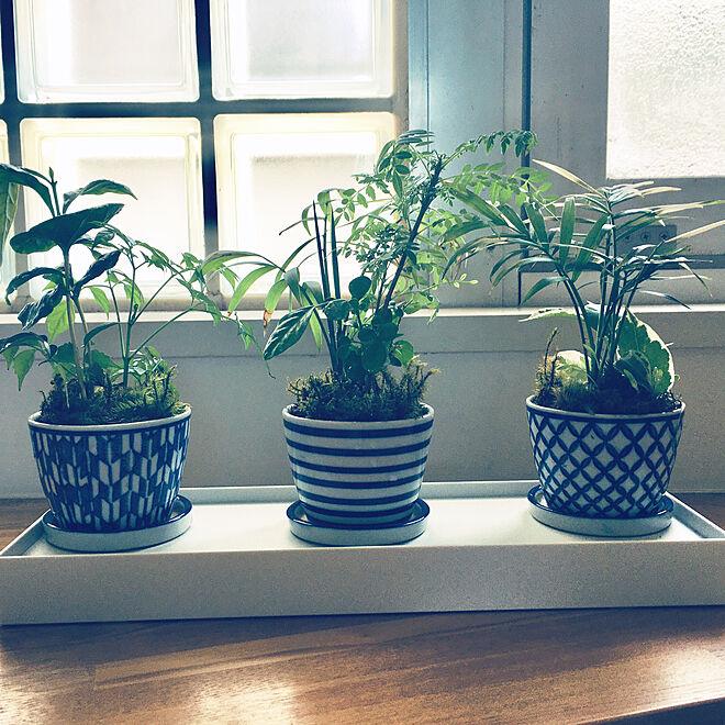 RoomClipアンケート/観葉植物/リビングのインテリア実例 - 2020-04-09 23:11:02