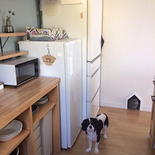 壁/天井/ムーミン/ペットと暮らす家/犬と猫と暮らす/塗り壁...などのインテリア実例 - 2017-09-27 22:09:02