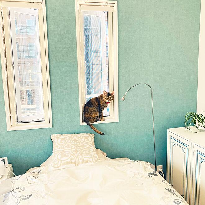 ホームセンターで買ったビニールクロス/フランフラン クッションカバー/お気に入りのカラー/アクセントクロス ブルー/保護猫...などのインテリア実例 - 2021-06-17 08:55:39