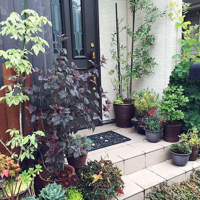 玄関/入り口/ジャンクガーデン/DIY/観葉植物/多肉植物...などのインテリア実例 - 2015-07-01 18:07:46