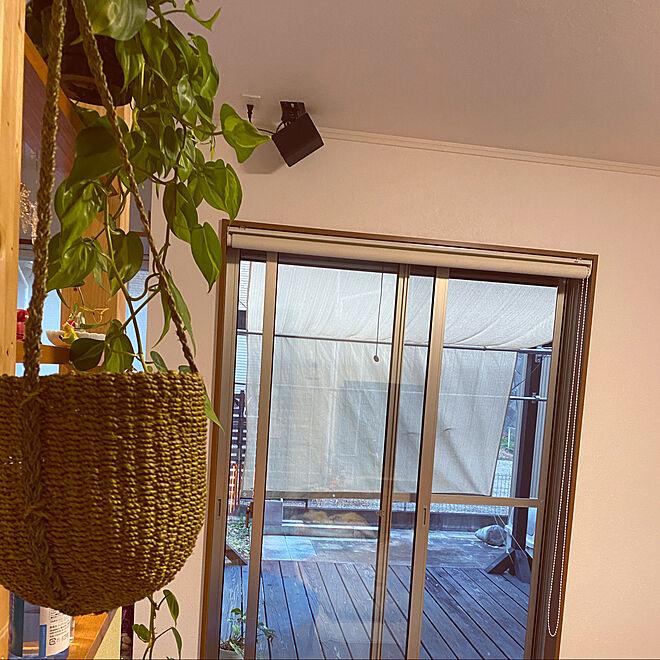 フィロデンドロン ブラジル/季節を楽しむ暮らし/植物のある暮らし/シンプルな暮らし/観葉植物のある暮らし...などのインテリア実例 - 2021-01-25 00:36:28