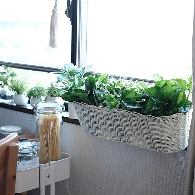 GREENのある暮らし/NO GREEN NO LIFE/花瓶/IKEA/キッチンのインテリア実例 - 2021-05-07 00:34:33