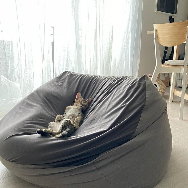 ねこと暮らす/おうち時間/猫のいる暮らし/ig→korenankore72/IKEA...などのインテリア実例 - 2021-08-02 00:14:17