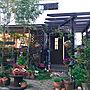 女性47歳の家族暮らし4LDK、ばらの庭Entranceやガーデニングやウッドデッキやガーデンライトなどに関するbutachanさんの実例写真