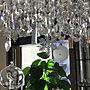 、カラスOn Wallsや観葉植物やグリーンやリビングなどに関するayaさんの実例写真