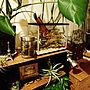 、りすさんオブジェMy Shelfやふぇいくグリーンや観葉植物やいなざうるす屋さんなどに関するppd.3aさんの実例写真