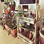 男性一人暮らし1LDK、サボテンリビングや観葉植物や絵やサボテンなどに関するsadaさんの実例写真