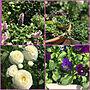 女性家族暮らし、セダム寄せ植えMy Shelfやガーデニングや花のある暮らしやセダム寄せ植えなどに関するkimuraruさんの実例写真