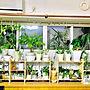 女性家族暮らし3LDK、木のテッシュboxLoungeやすのこ棚やフォローすごく嬉しいです♡やいいね!ありがとうございます♪などに関するrikomiさんの実例写真