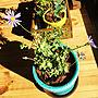 女性41歳の家族暮らし2LDK、緑のある暮らしリビングや平屋や無垢材や木のお家などに関するkanato.no.outhiさんの実例写真