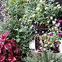 女性家族暮らし4LDK、アメリカンブルー部屋全体やガーデニングやラベンダーやお庭などに関するk.keikoさんの実例写真