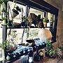 女性一人暮らし、作業テーブルMy Shelfや木製や植物やDIYなどに関するARCATSさんの実例写真