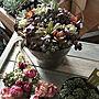 女性で、4LDKのDIYのある暮らし/DIY/gardening/garden/多肉植物寄せ植え…などについてのインテリア実例を紹介。