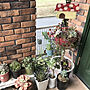 女性家族暮らし、ハーブガーデンEntranceや鉢植えや黒法師や多肉植物などに関するkayoさんの実例写真