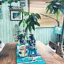 男性一人暮らし3LDK、アロハストリートMy Deskや観葉植物やウォールナットやクリスマスツリーなどに関するtak-itoさんの実例写真