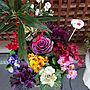 女性家族暮らし、かだん Entranceやお花やお花のある暮らしや玄関などに関するhiro-yさんの実例写真