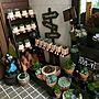 女性48歳の家族暮らし4LDK、ダイソー鉢Entranceや大人買いや多肉植物やダイソー鉢などに関するbutachanさんの実例写真