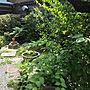 男性51歳の家族暮らし、梅花空木Entranceや梅や和風や花のある暮らしなどに関するtommyさんの実例写真