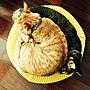 家族暮らし、MINI PUUFリビングやIDEE (イデー)や猫と暮らすやMINI PUUFなどに関するakkorosukeさんの実例写真