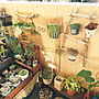 女性家族暮らし3LDK、ワッツ玄関/入り口や観葉植物や多肉植物やセリア (seria)などに関するsatominさんの実例写真