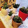 、イケアソファLoungeやIKEAや観葉植物や多肉植物などに関するmogcoさんの実例写真