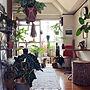 男性一人暮らし1DK、パシフィックファニチャーOverviewや観葉植物やグリーンやイームズなどに関するSHINPEIさんの実例写真