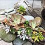 女性33歳の家族暮らし3LDK、海の石Entranceや多肉植物や流木や海の石などに関するpepeさんの実例写真