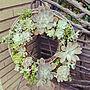 女性42歳の家族暮らし4LDK、ビーチサンダルEntranceや観葉植物や写真や鍋つかみなどに関するyonyonさんの実例写真