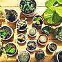 女性家族暮らし、ダイソー産Loungeやダイソーや植物やサボテンなどに関するaliceさんの実例写真