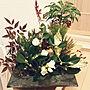 女性33歳の家族暮らし4LDK、十両Entranceや正月飾りや椿南天松アオキ万両などに関するnori-.52.-ironさんの実例写真