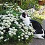 女性50歳の家族暮らし4LDK、山野草春の庭や猫と庭ばかりでゴメンなさいや猫が好きやバラが好きなどに関するyum0408さんの実例写真