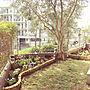 女性39歳の家族暮らし4LDK、にわEntranceやガーデニングやオリーブの木やにわなどに関するcomoさんの実例写真