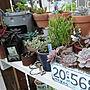 、かわいい子(*´∀`)My Shelfや植物や棚やガーデニングなどに関するpocoさんの実例写真