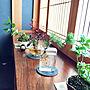 女性家族暮らし、アクア盆栽Overviewや和室や苔や盆栽などに関するmamyuさんの実例写真