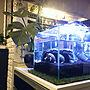 女性家族暮らし4LDK、水槽ディスプレイ棚やペットやミシシッピニオイガメや水槽ディスプレイなどに関するkaerucoさんの実例写真